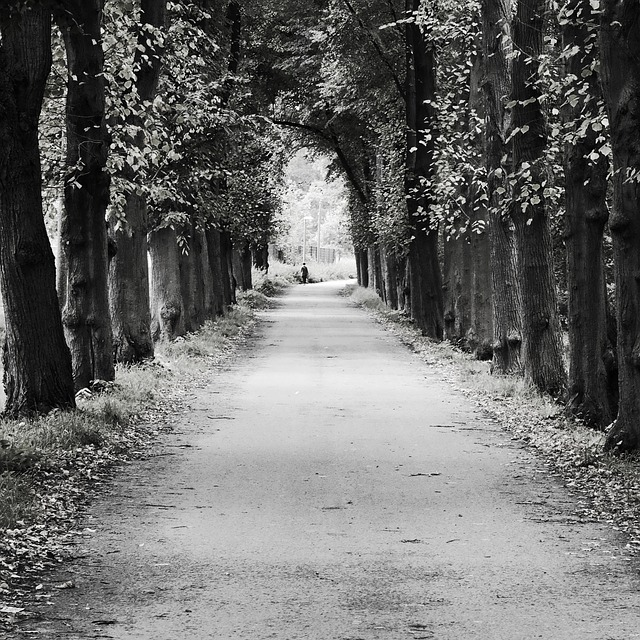 pathway of trees forming a tunnel