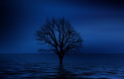 bare tree in the middle of the water