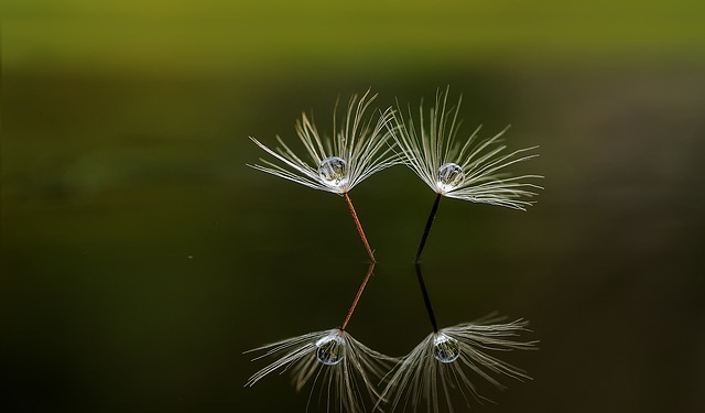 reflection of floating seed on water
