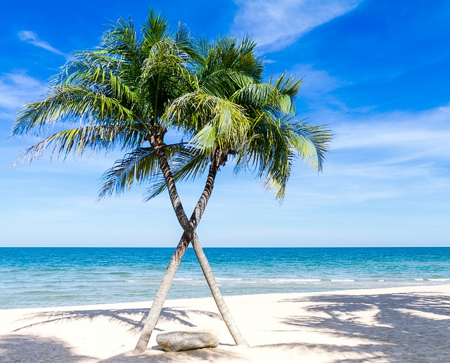 criss crossed palm trees on a beach
